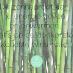Zonnegroet Yoga in 10 stappen! (Incl. video)
