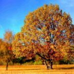 De Energie van Herfst, Yogatips